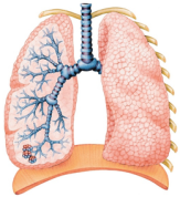 lung-pic.png